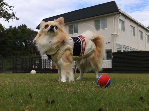 【ドッグラン】中型犬用・小型犬用2か所のドッグランをご用意
