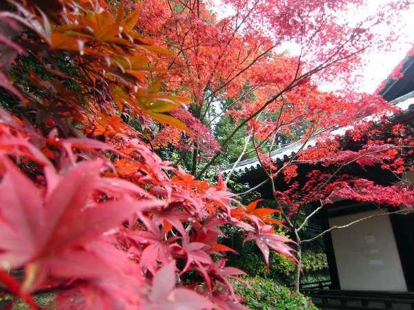 11月中旬から下旬にかけて、境内の紅葉が鮮やかに色づきます