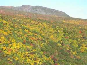 黄色、赤、オレンジ、鮮やかに色づくあだたら山の紅葉。