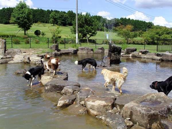 【園内一例】池のドッグラン。全部で3つのドッグランがございます