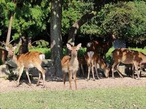 【ホテル前に住む野生の鹿】