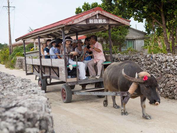 *【水牛車観光】三線を弾きながら、島内の美しい町並みをの~んびり案内してくれます♪