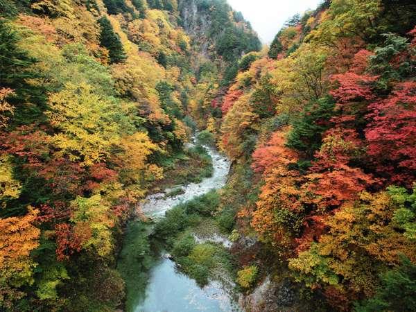 【高瀬渓谷】鮮やかな紅葉が広がります