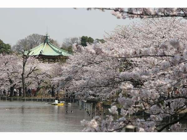 桜の名所 ~恩賜上野不忍池~
