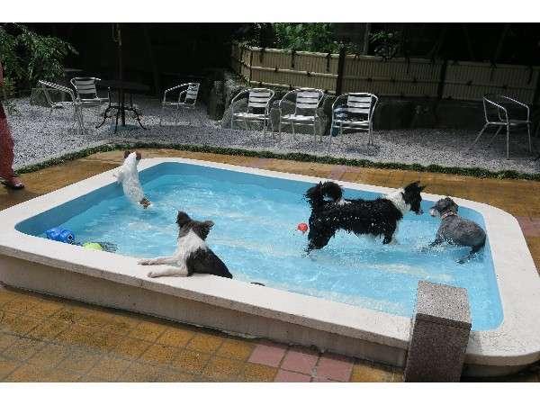 ペット専用プール