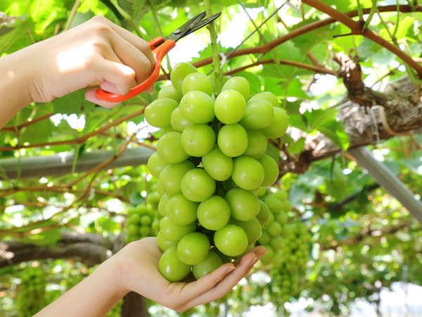 フルーツ王国おかやまのシャインマスカットを味わってください。※写真は岡山県観光連盟提供