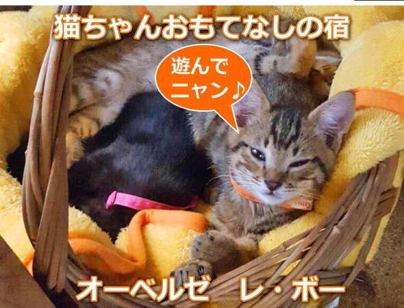 【最近、子猫3匹が仲間入りしましたニャー♪】可愛いしぐさに思わずウットリ~☆ヽ(=^゚ω゚)^/