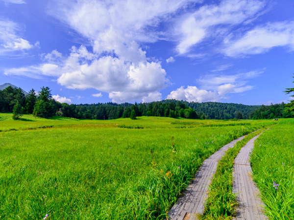 ■【尾瀬】美しい自然溢れる尾瀬へ出かけましょう