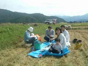 加賀屋のお米は、自家製魚沼(しおざわ)コシヒカリ。一家総出で収穫