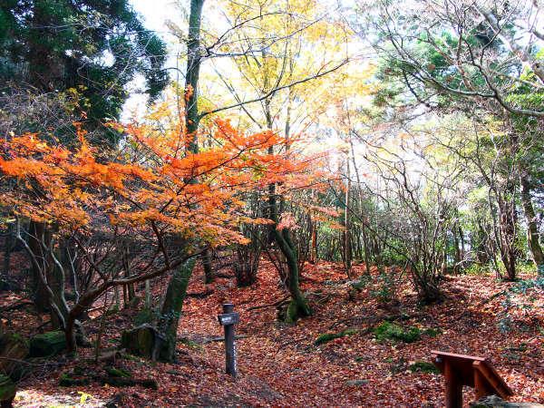 秋の英彦山風景。散策にはとても良い季節ですよ♪