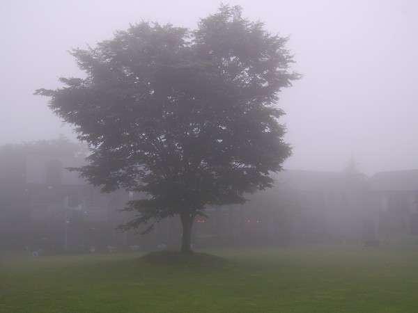 霧の中の幻想的な空の庭