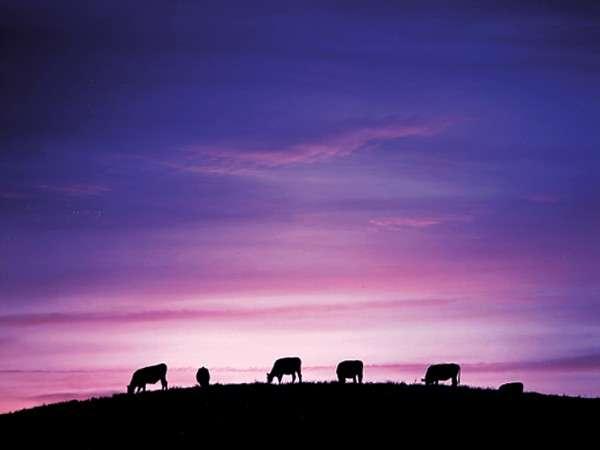■四国カルスト牛と夕景■ここにしかない!絶景パノラマ!!