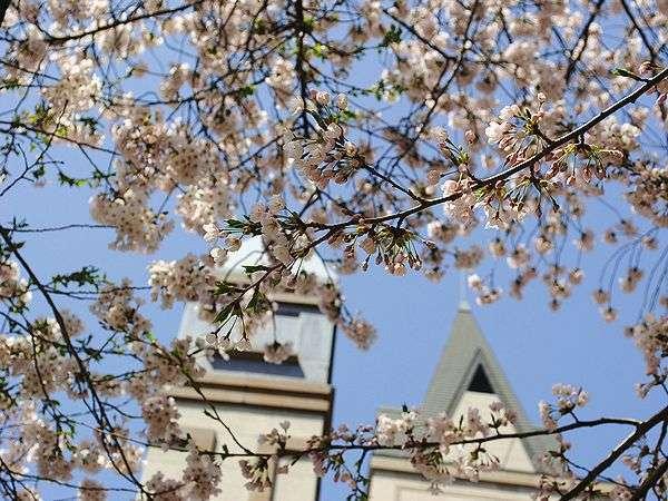 *【春】待ちに待った桜の季節到来