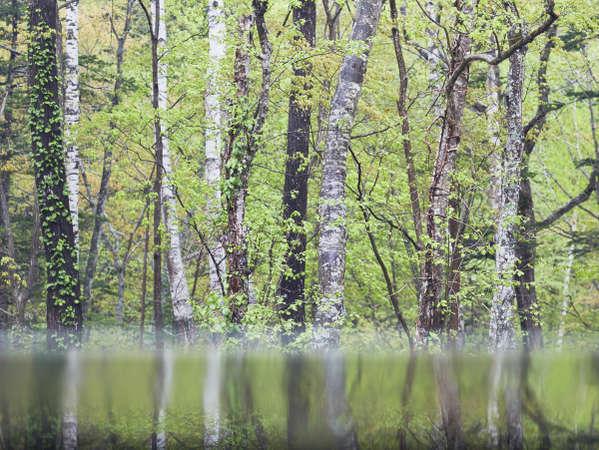 【森の展望風呂】湯に映る森