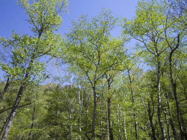 【庭園】手つかずの原生林が生い茂る太古の自然を感じて
