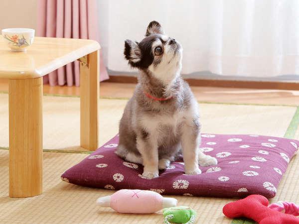オタマヤは家族の一員のペットと一緒に泊まれる宿です