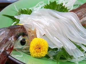 【漁師直送の宿♪ 秀竹】【貸し切り風呂】越前越前蟹&活イカ漁小さな漁師宿