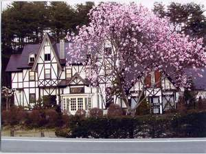 春を告げる辛夷の花とペンションの外観