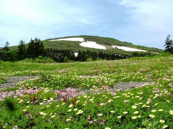 森吉山の春~夏はトレッキングでお楽しみいただけます