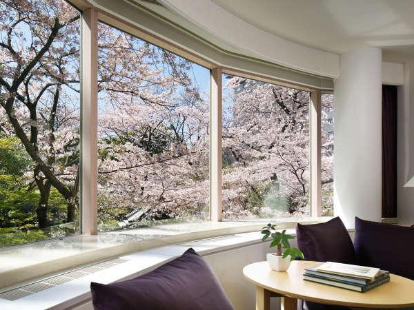 ジュニアスイートツインの窓から見える桜の景色※開花の時期・客室により見え方が異なります。