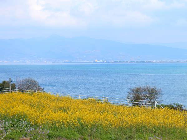 わらびの丘敷地内にある、春の菜の花畑