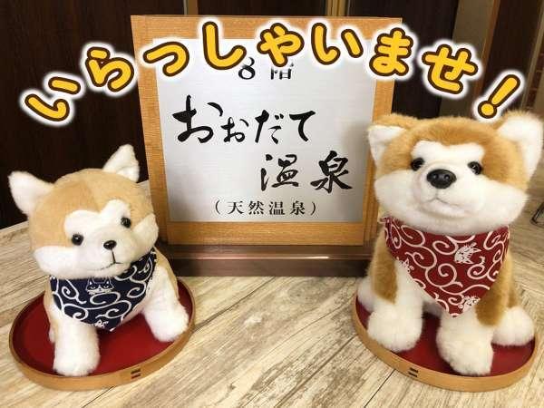 1Fフロントでは僕たち秋田犬がお出迎えするワン!