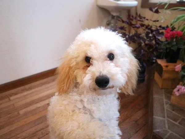*スタッフ一例/看板犬「ポニョ」がお客様をお出迎え致します♪