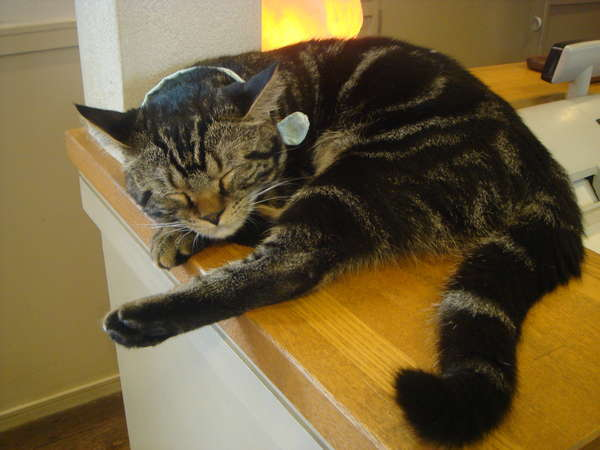 いつもカフェで眠っている「ふくすけ」です。
