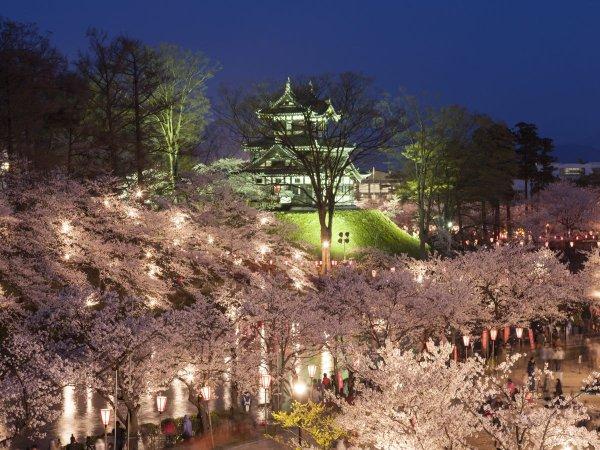 高田の桜 夜景