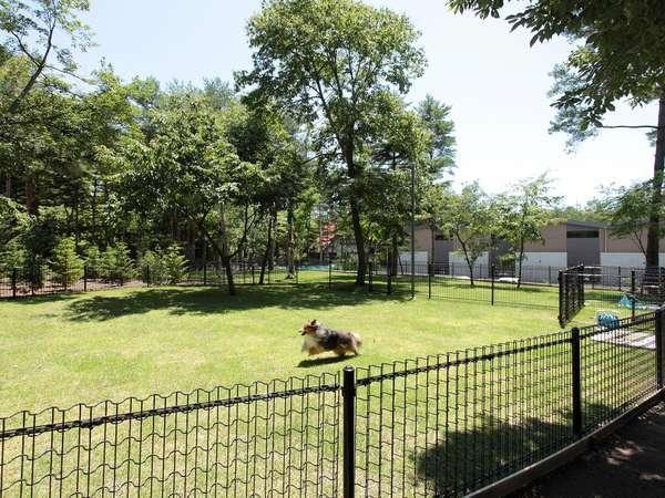 【ドッグラン】軽井沢では珍しい天然芝のドッグランを設置(小型犬専用・全犬種用)