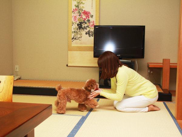 【客室】わんちゃんと一緒にゆっくりお過ごしいただけます。