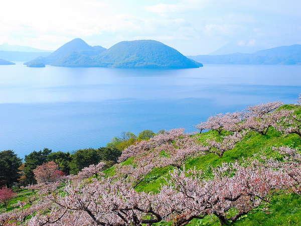 【洞爺湖・春】~梅公園のピンクに湖の青が映える絶景~