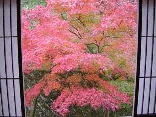湯河原の紅葉は11月下旬~12月上旬・・錦秋の山々を望み、あったかい温泉に浸かれば、身も心もほっこり♪