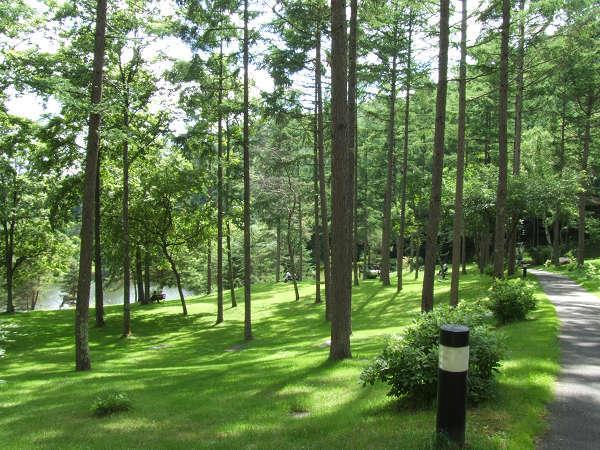 清々しい空気の中、森林浴をしながらの散歩