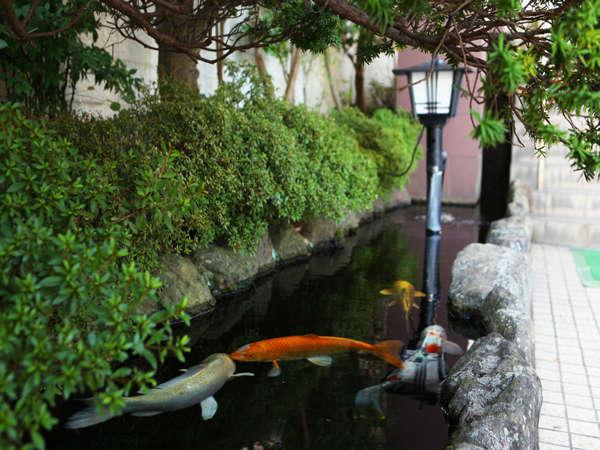 エントランスは大きな鯉がお出迎え。「いらっしゃいませ。お疲れ様でございました」