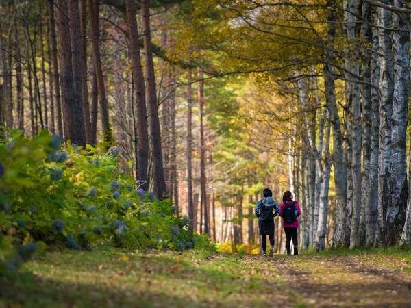 【岩手県民の森】お散歩に最適です。季節を通じて楽しめます。