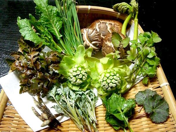 ■山菜■手摘みの山菜は新鮮でおいしい♪当館オリジナル料理とともにお召し上がりいただけます*