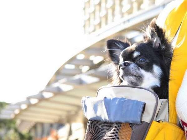ヒルトン小田原リゾート&スパは大切な愛犬と泊まれるリゾートホテル