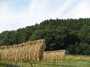 ちちぶの風景 新米が美味しい季節到来!
