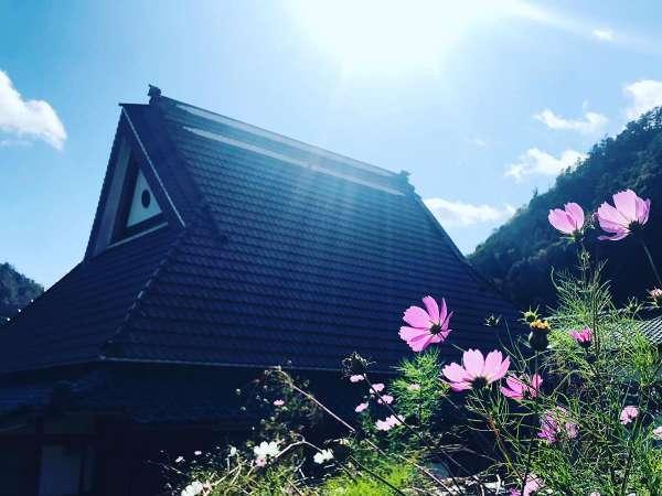 瓦を被るも、かやぶき古民家。屋根裏に上がると立派なかやぶきが見えます。秋にはコスモスが咲き誇ります。