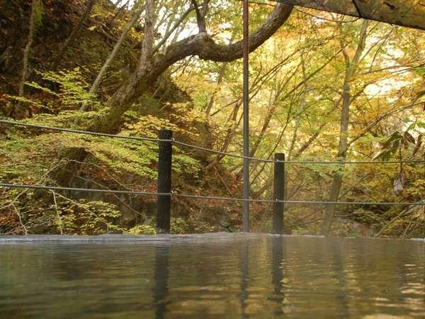 【仙人露天岩風呂】松川渓谷の黄葉に包まれて入る温泉は格別