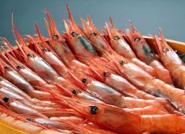 日本海で育った甘海老は透き通った身ととろけるような甘みと粘りが特徴!ぷりぷりに身はまさに絶品です。