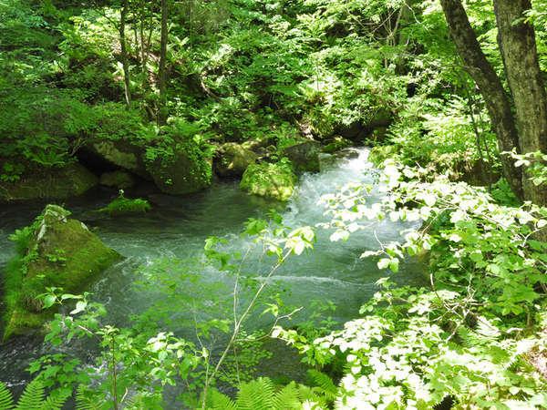 *【奥入瀬渓流】手つかずの自然を楽しむ空間です。