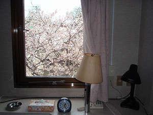 お部屋からの眺め。春には目の前に桜。