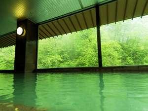 銀杏館大浴場【夏】原始林の緑が爽や