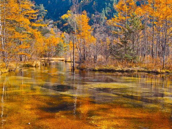 【上高地】紅葉に彩づく上高地は夏とは違った風景を見せてくれます