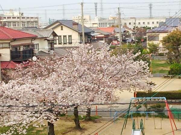 窓から桜が見えます