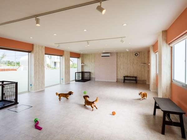 おもちゃいっぱいの屋内ドッグラン