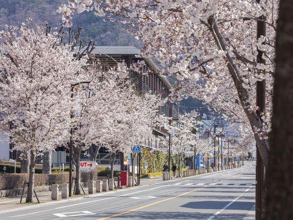 鬼怒川金谷ホテル入口のさくら通りの桜並木。