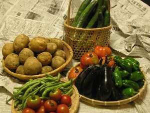 ●女将手作り取れたて野菜●NPO法人エコクラブみのぶ協力のEM農法で作る甘い野菜。朝取り田舎体験も計画中